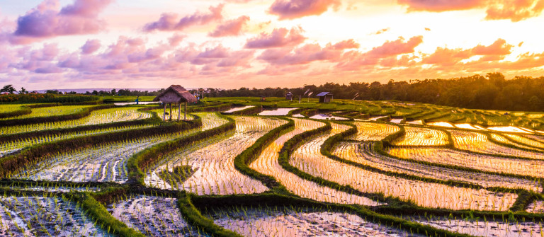 Bali-Rice-Fields-Sunset-iStock_000055009954_Large-2