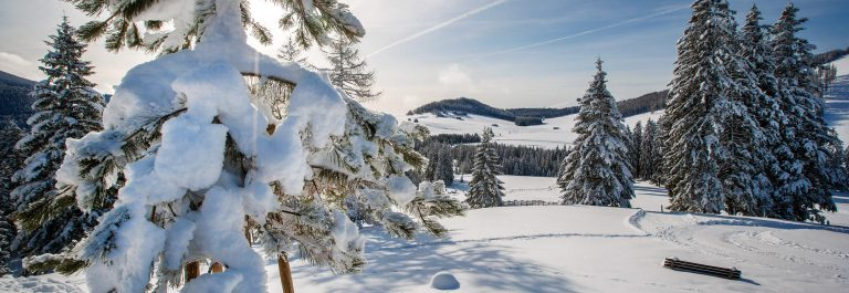 HE Almwellness Hotel Pierer in der Steiermark