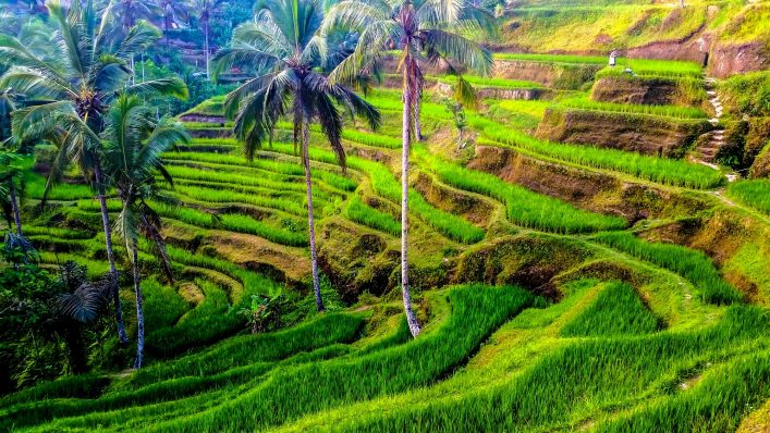 rive-terrassen-der-tegalalang-istock_000081450459_large-2