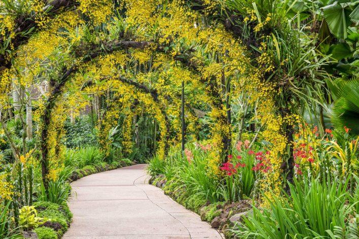 orchid-garden-singapore-botanic-garden-shutterstock_92813191-2