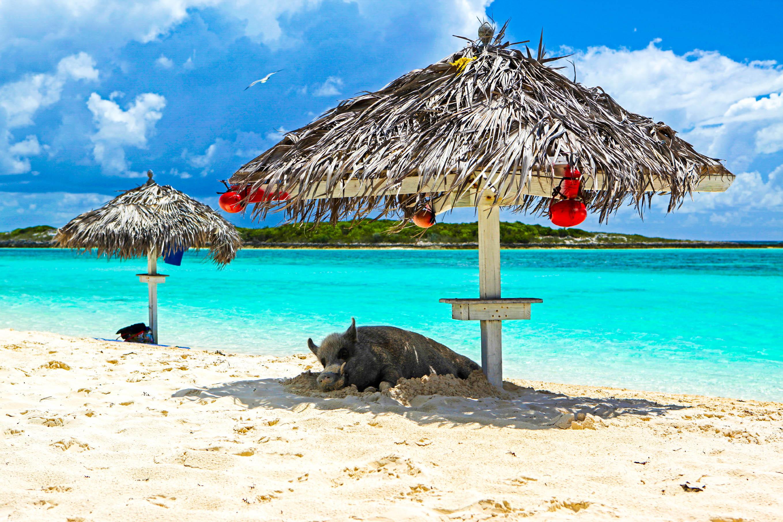 Pig Beach Bahamas Hotel