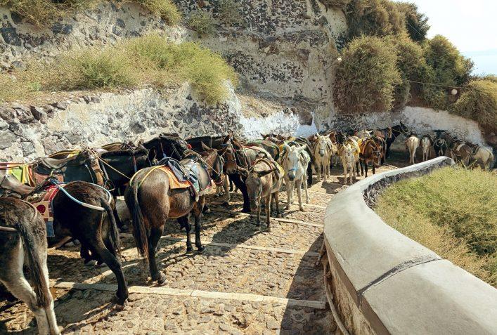 urlaubsguru.de_santorinis-donkeys-istock_000020274584_large