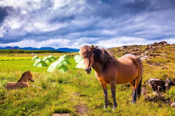 Islandpferde Trekking