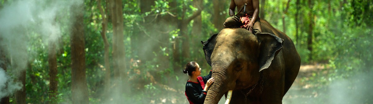 Elephant with asian girl