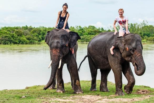 Elefantenreiten - Urlaubsspaß oder Tierquälerei?