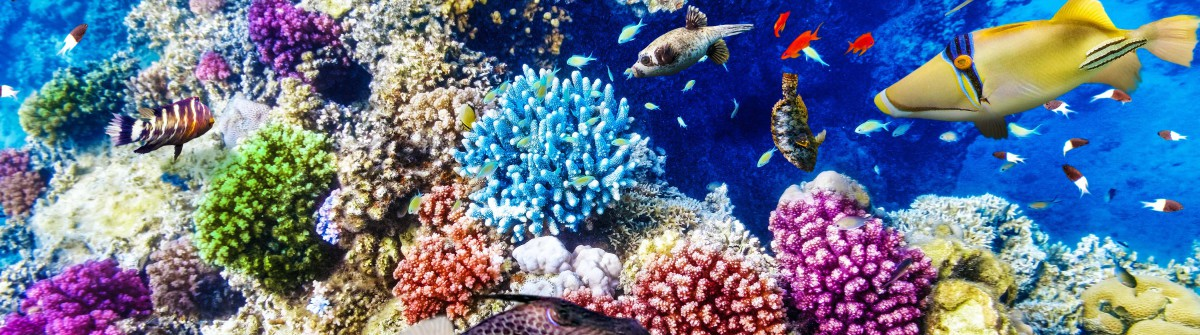 wonderful-and-beautiful-underwater-world-with-corals-and-tropical-fish-shutterstock_261953732-2