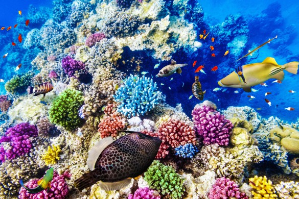 wonderful-and-beautiful-underwater-world-with-corals-and-tropical-fish-shutterstock_261953732-2-585×390