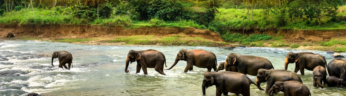 sri-lanka-elephant-washing-asia-sunset-istock_000083566505_large-2