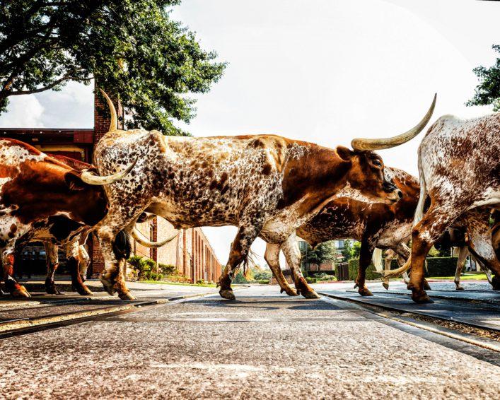 texas-longhorns-istock_000028369474_large-2