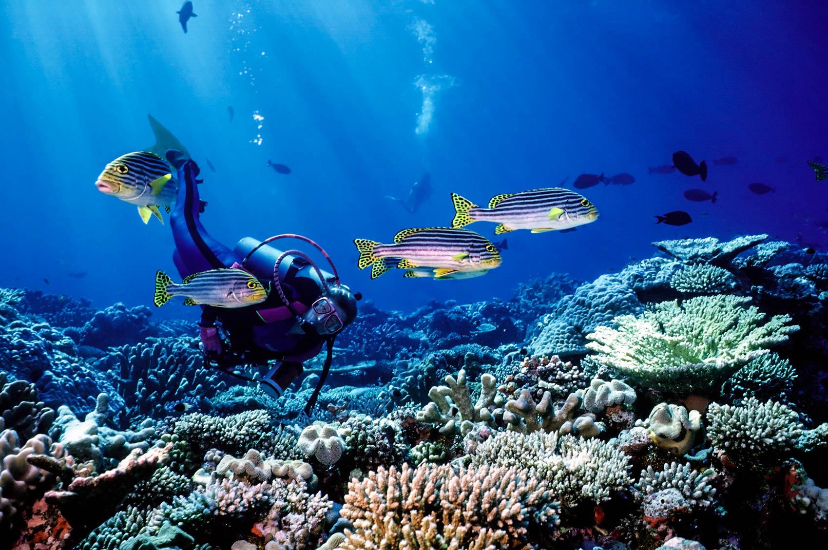 Malediven, Sport, Diving, Fish