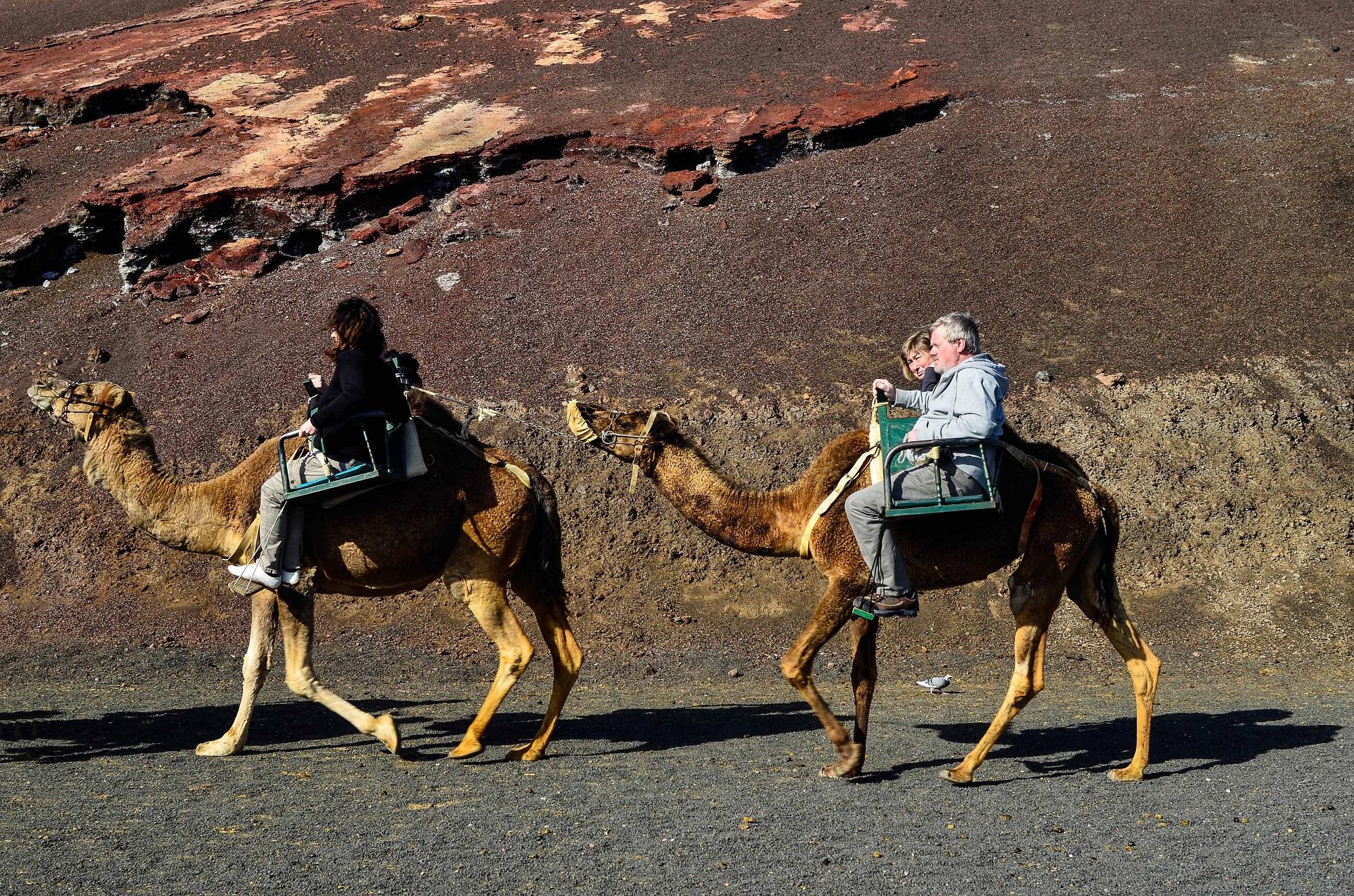 Lanzarote Tipps - Kamel reiten