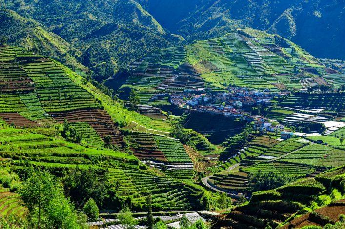 Reisterrassen auf der Insel Java