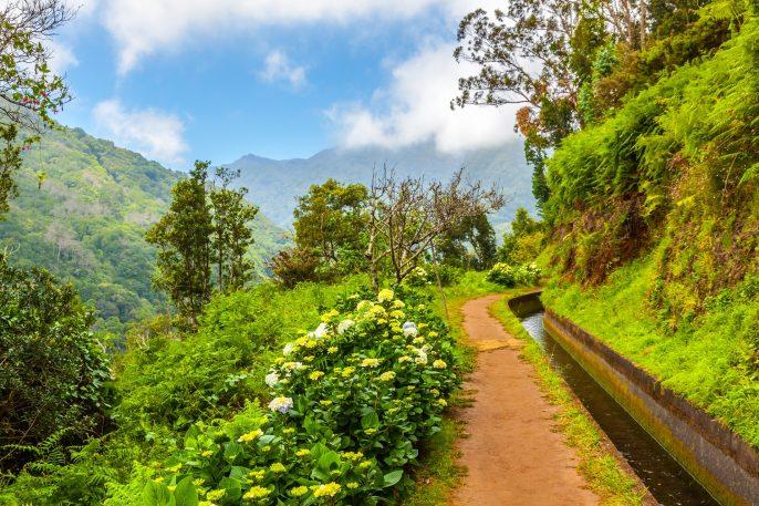 Along the Levada, Madeira