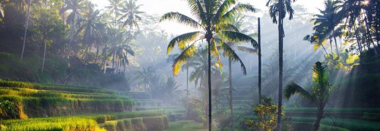 Tegallalang Reiseterrassen auf Bali