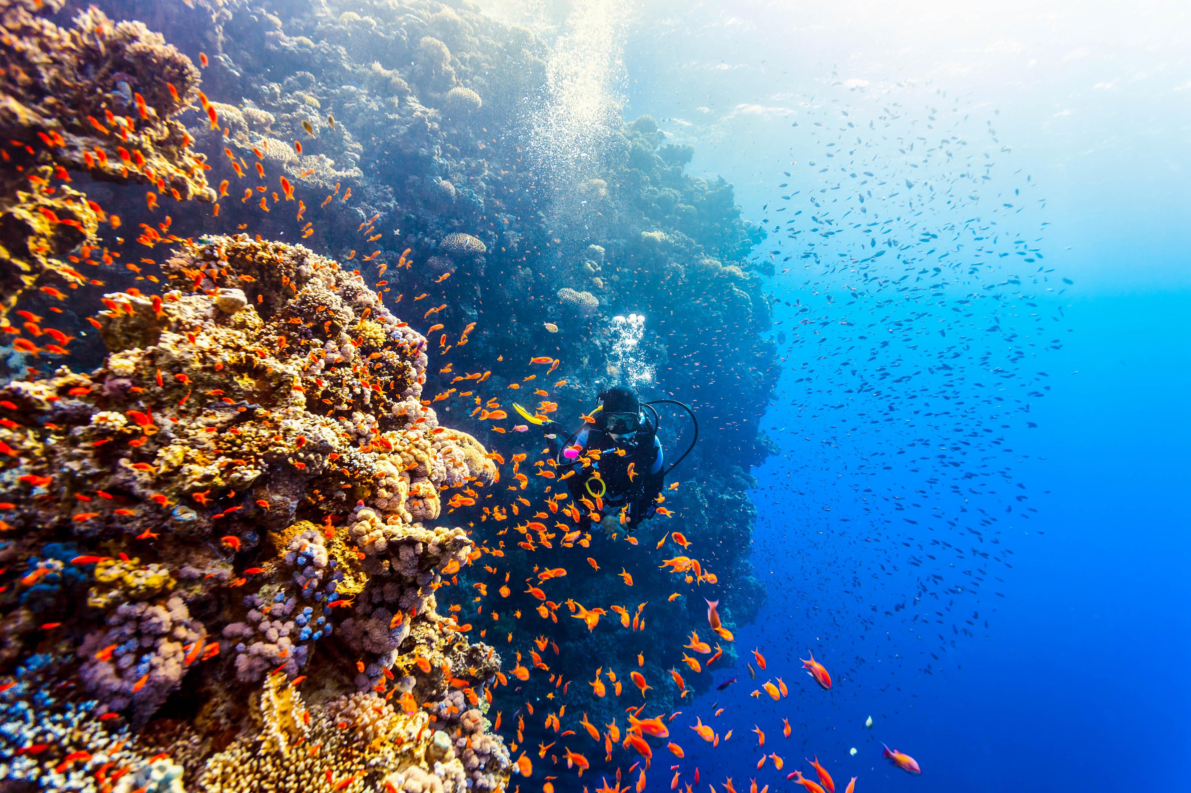 Taucher Unterwasserwelt Tauchplätze Fische