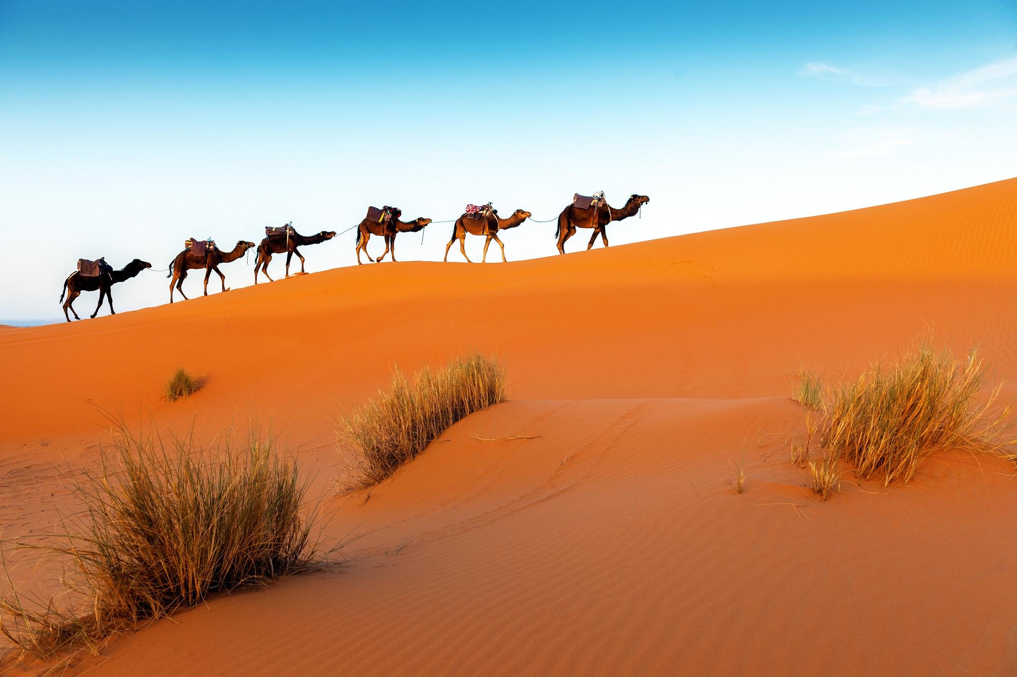 Hurghada Tipps, Kamele, Safari, Wüste, Ägypten
