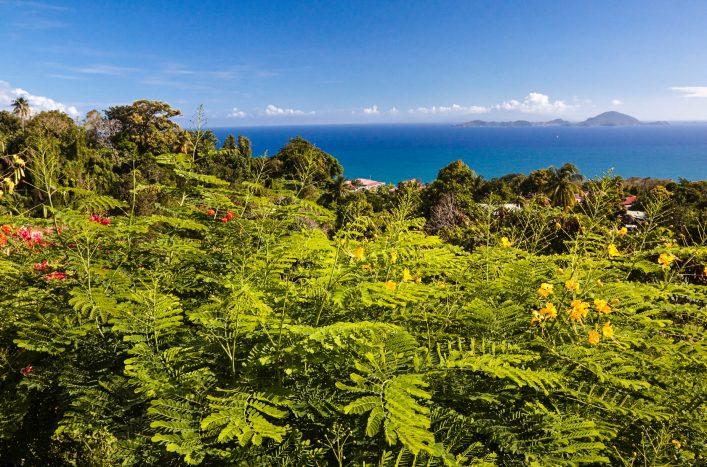 caribbean-island-guadeloupe-istock_000008795574_large-2