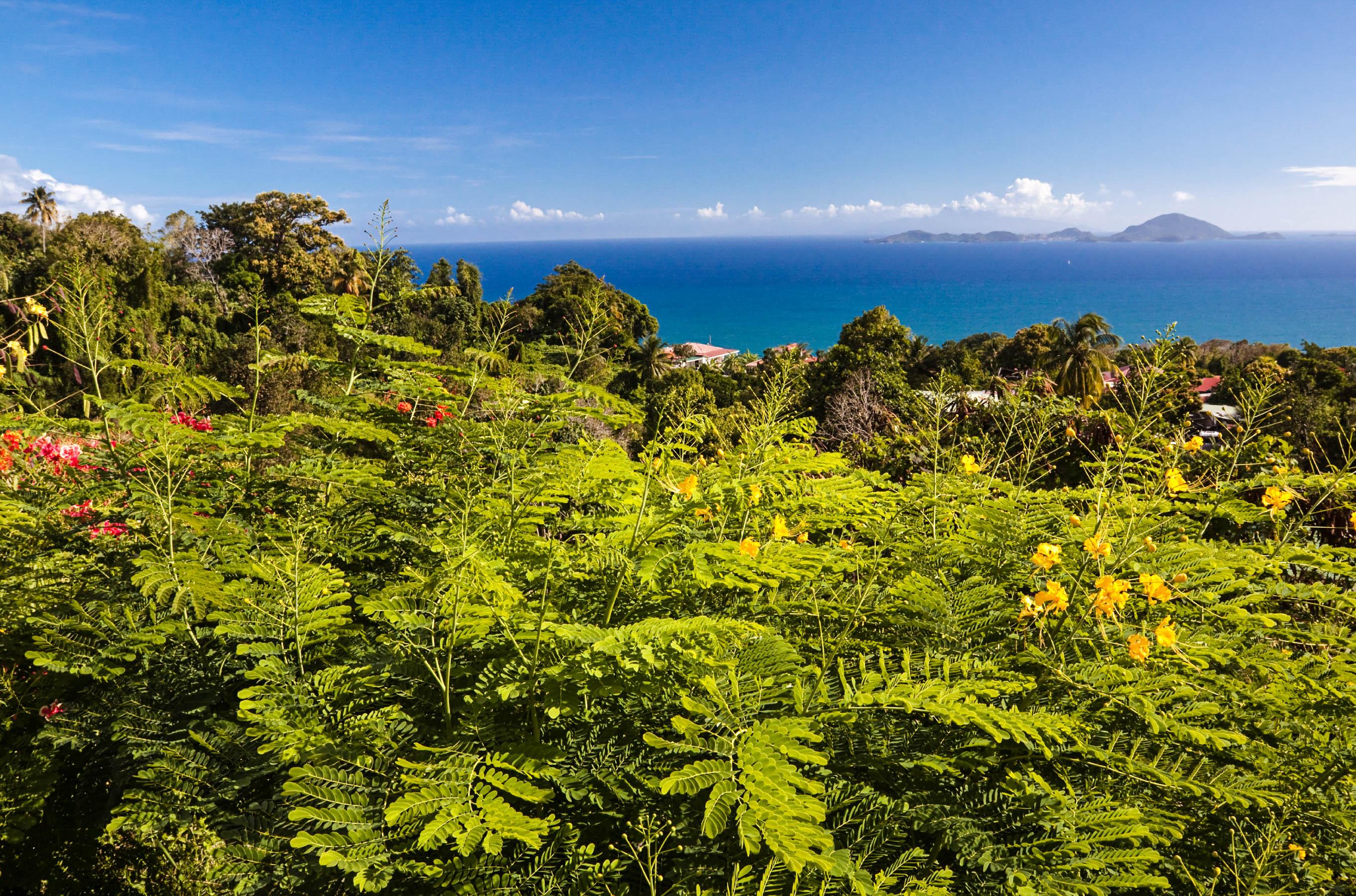 Tropische Regenwälder auf Guadeloupe