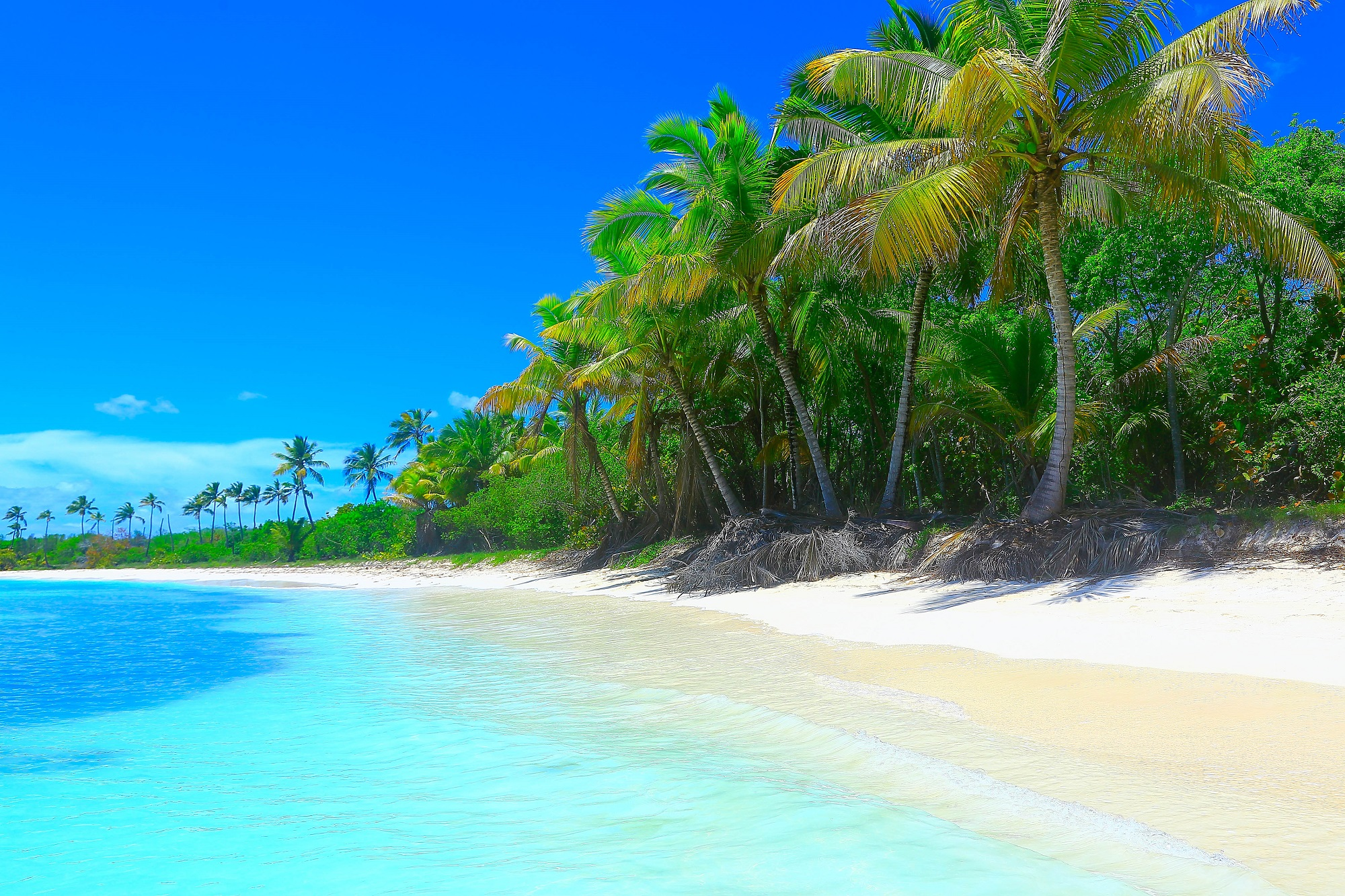 Barbados, Beach, Ocean, Palms