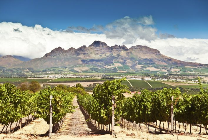urlaubsguru.de_stellenbosch-vineyards-istock_000019397934_large