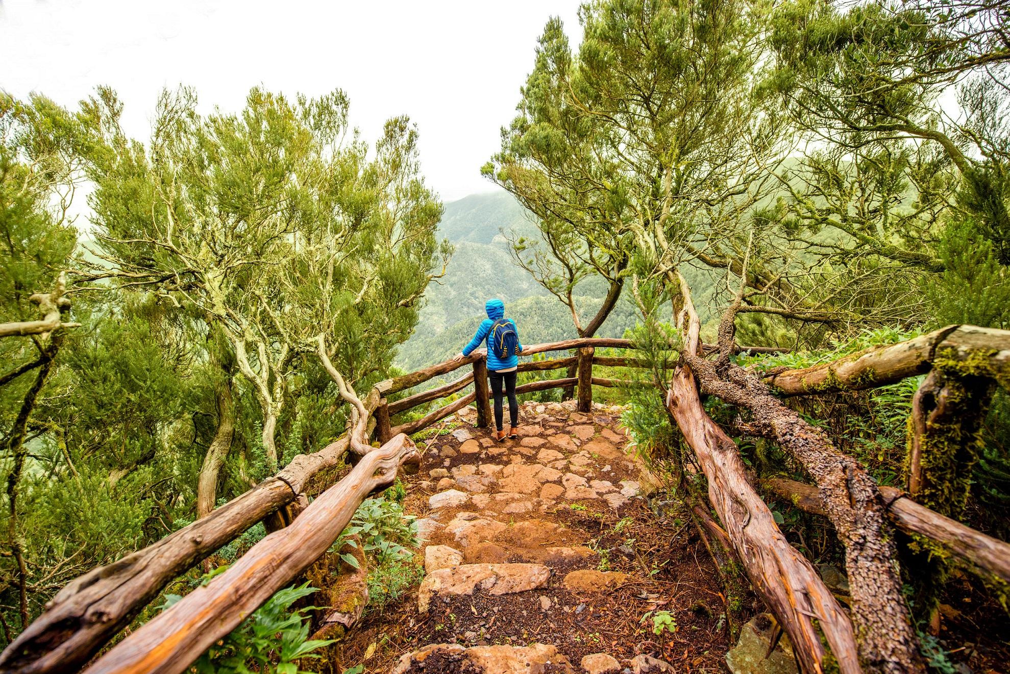 Garajonay Nationalpark La Gomera