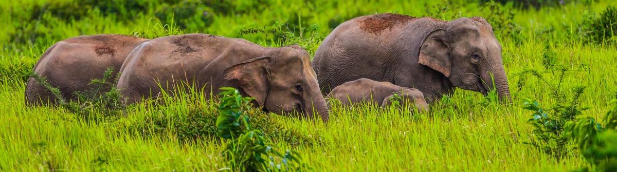 kleine-gruppe-von-wilden-elefanten-nationalpark-khao-yai-istock_000073602235_large-2 (1)
