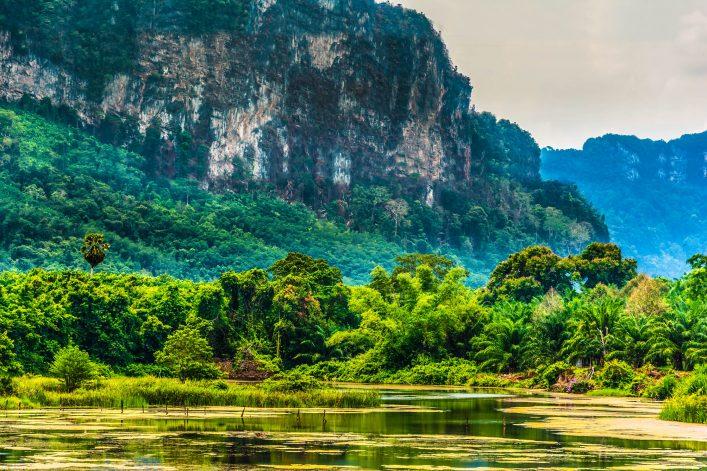 tropischer-regenwald-phuket-mountain-range-thailand-istock_000044832618_large-2