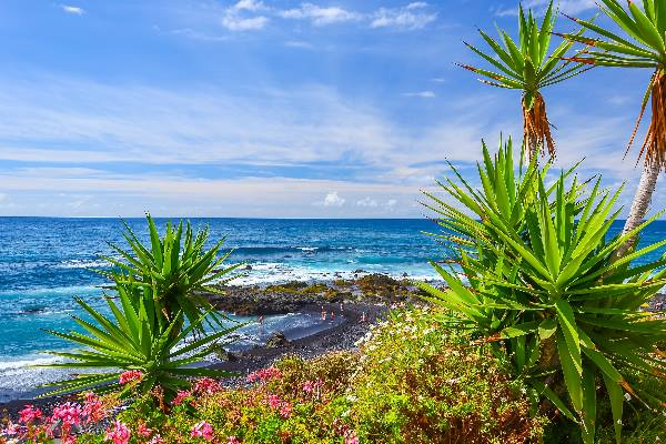 Green-tropical-plants-on-beach-in-Puerto-de-la-Cruz-Tenerife-Canary-Islands-Spain_shutterstock_241485676_klein