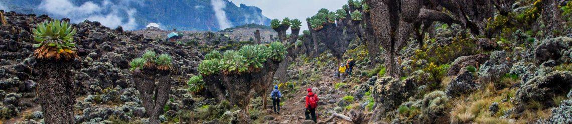 Kilimandscharo-Trekking-Tansania_shutterstock_278193683