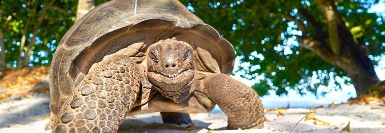 Seychellen turtle shutterstock_620020238