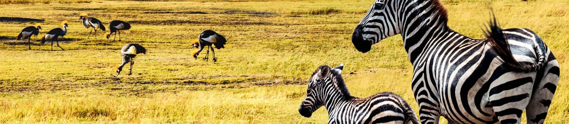 Beste Tansania Reisezeit