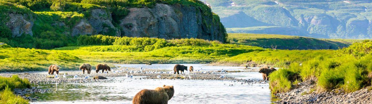 group-of-alaska-brown-bears-fishing-salmon-at-mcneil-river-usa-istock_000080063939_large-2