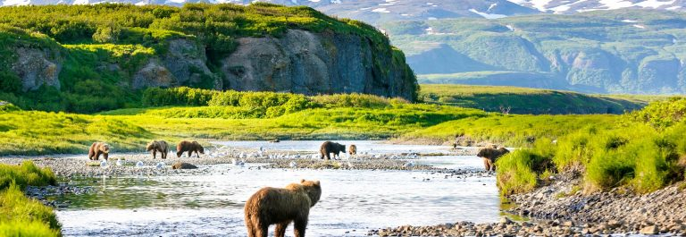 group-of-alaska-brown-bears-fishing-salmon-at-mcneil-river-usa-istock_000080063939_large-2