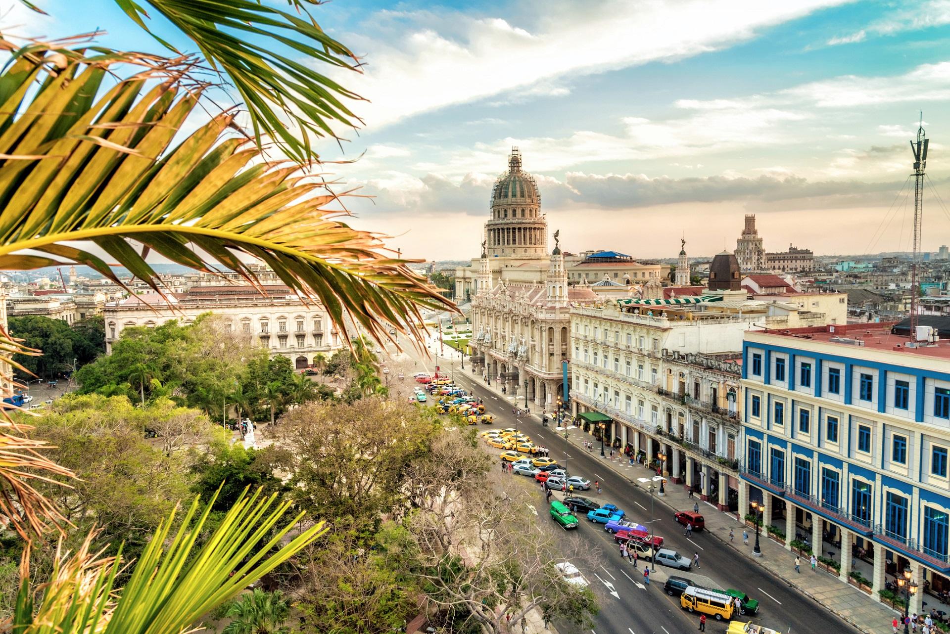 Havannas