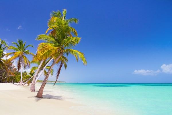 Punta_Cana_DomRep_Beach_Palme_iS-515073340_1920x420