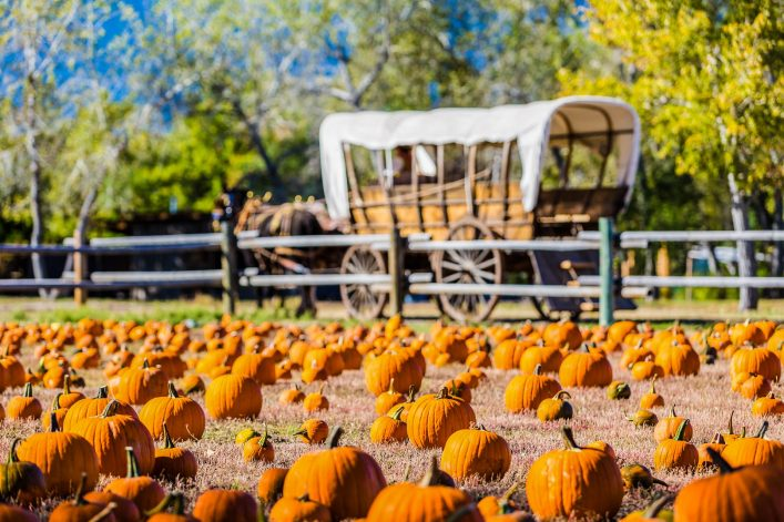 selecting-pumpkin-from-pumpkin-patch-in-early-autumn-shutterstock_222189772-2