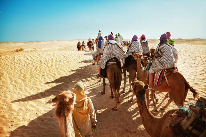 Camel Dessert Sahara iStock_000020596858_Medium