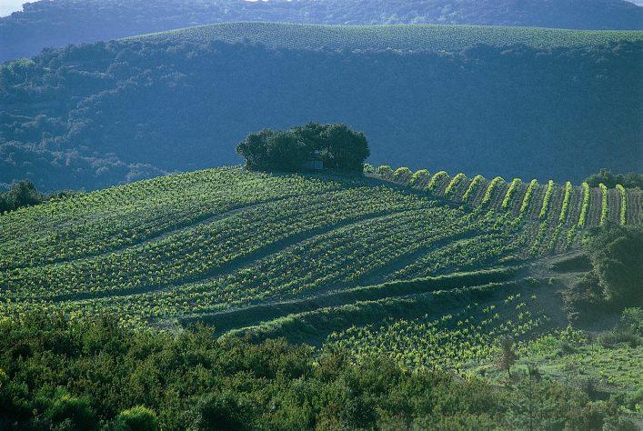 Pays Haut Languedoc et Vignobles