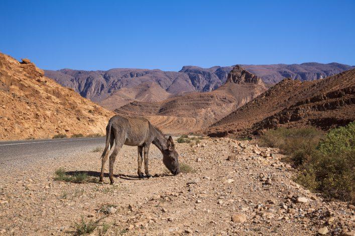 Road trip:  Atlas mountains, Morocco