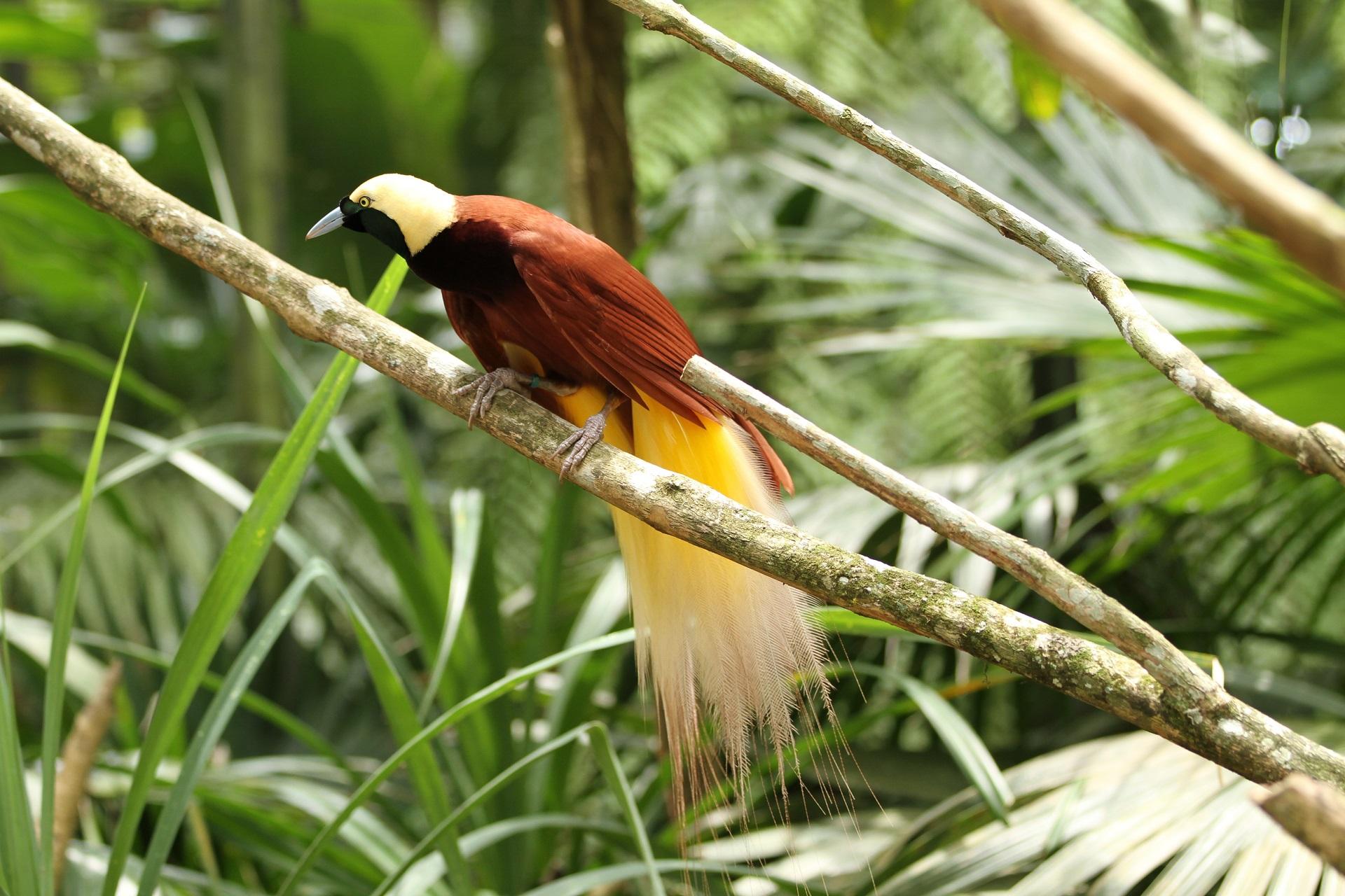 Tierwelt in Papua-Neuguinea