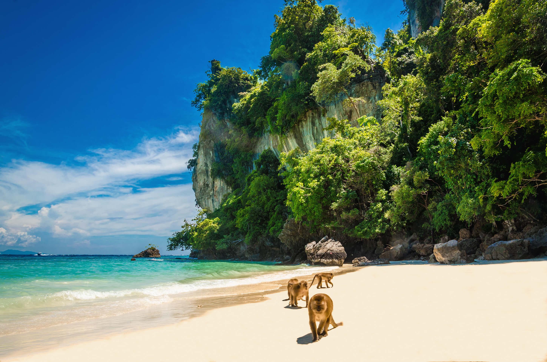 Affen am Strand in Thailand