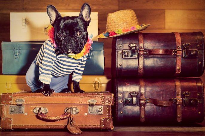 Gepäck und Hund