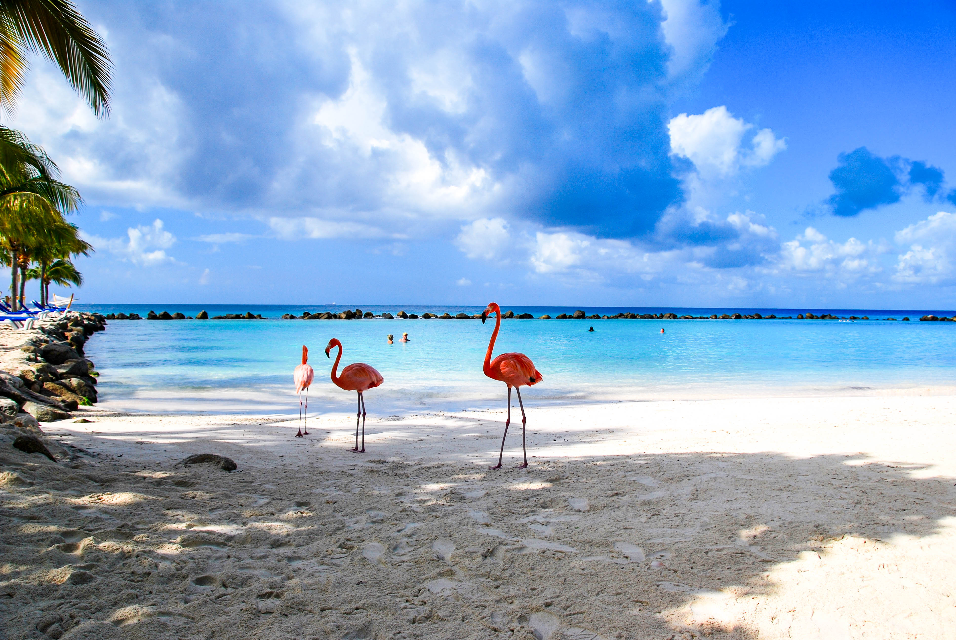 Flamingos am Strand von Aruba