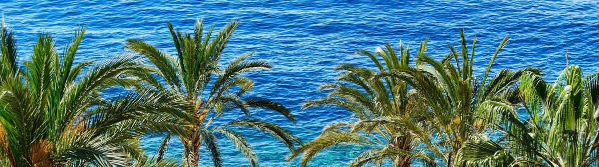 Blick aufs von Palmen gesäumte Mittelmeer