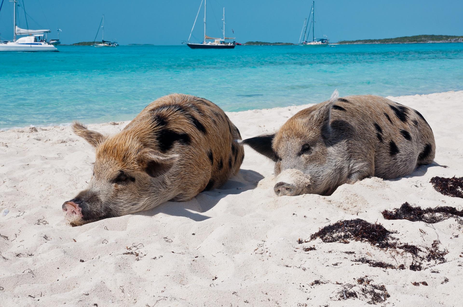 Scheine am Strand von den Bahamas