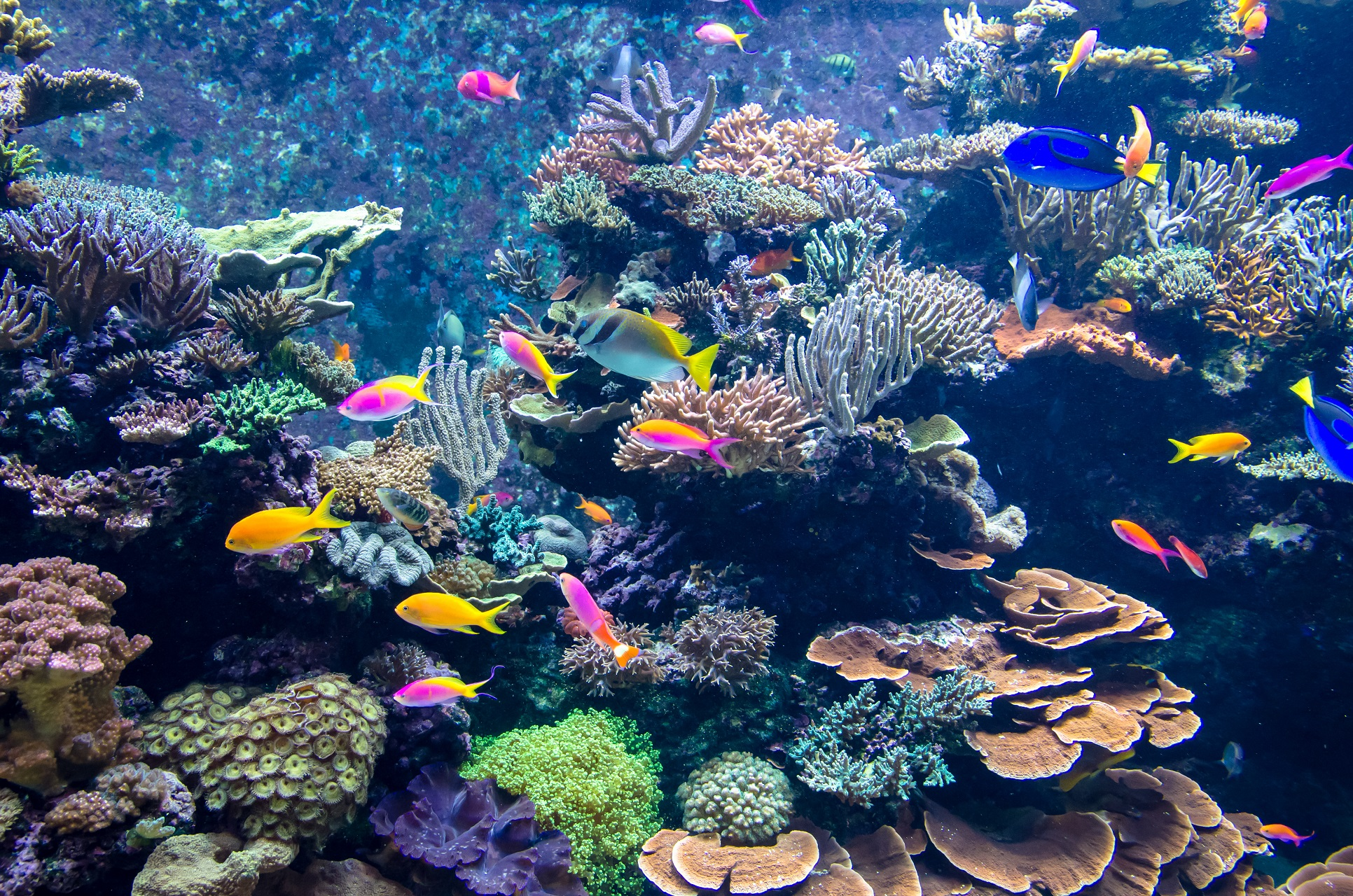 Das Aquarium am Flughafen von Vancouver.