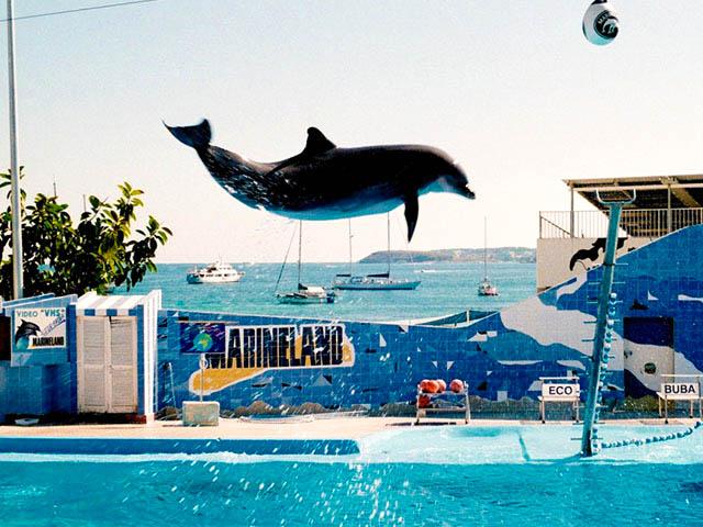 delfin_im_marineland_mallorca-by-mga73bot2-cc-by-sa-3.0_
