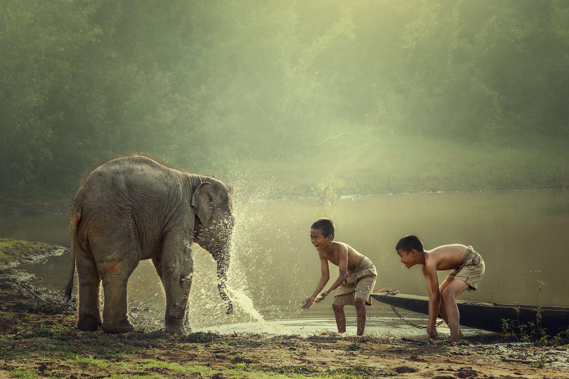 Kinder spielen mit einem kleinen Elefanten