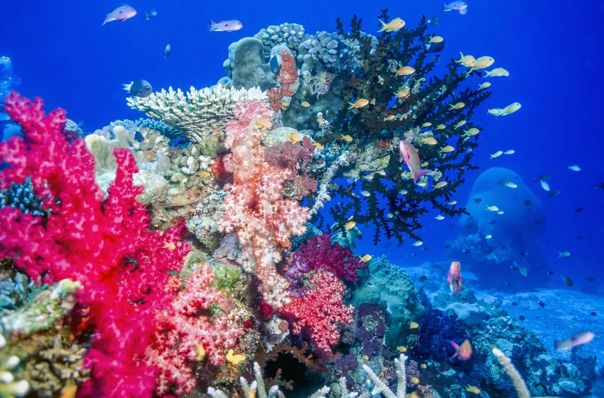 Auch die Unterwasserwelt auf den Fidschi Inseln ist wunderschön