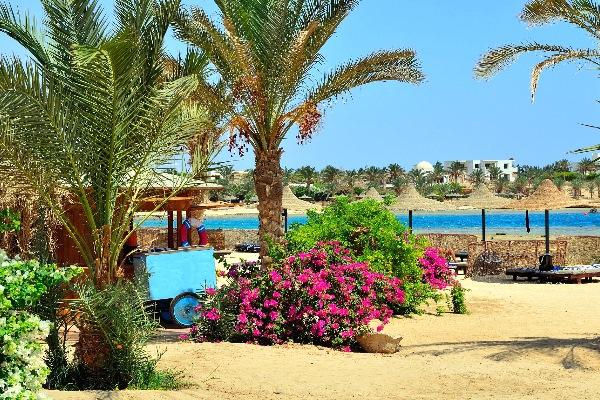 Strand in Marsa Alam in Ägypten mit Palmen und einem pinken Blumenbeet im Vordergrund